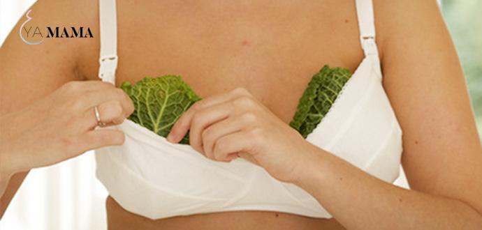 Капустные листья при боли в груди