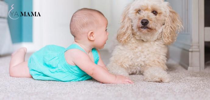 Малыш лежит на полу возле собаки